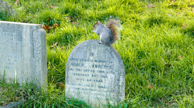 Squirrels on my mind (and visiting Brompton Cemetery)